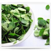 Moringa Oleifera - Hojas Frescas